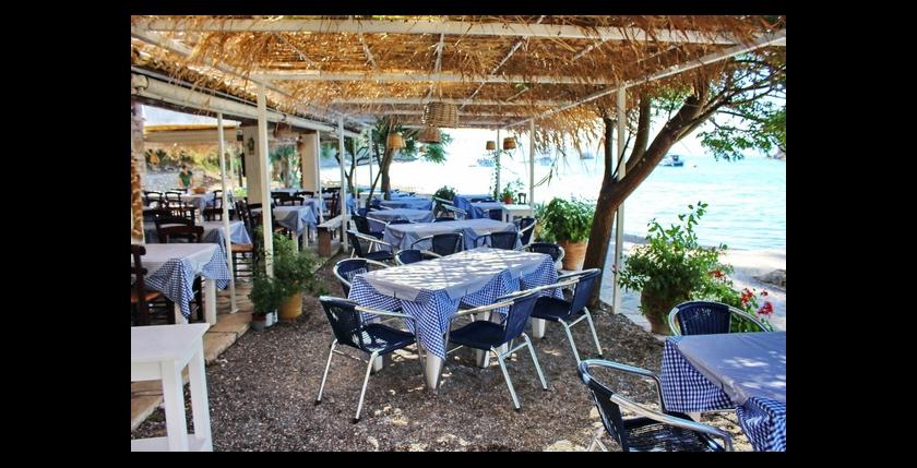 Eucalyptus Taverna 1