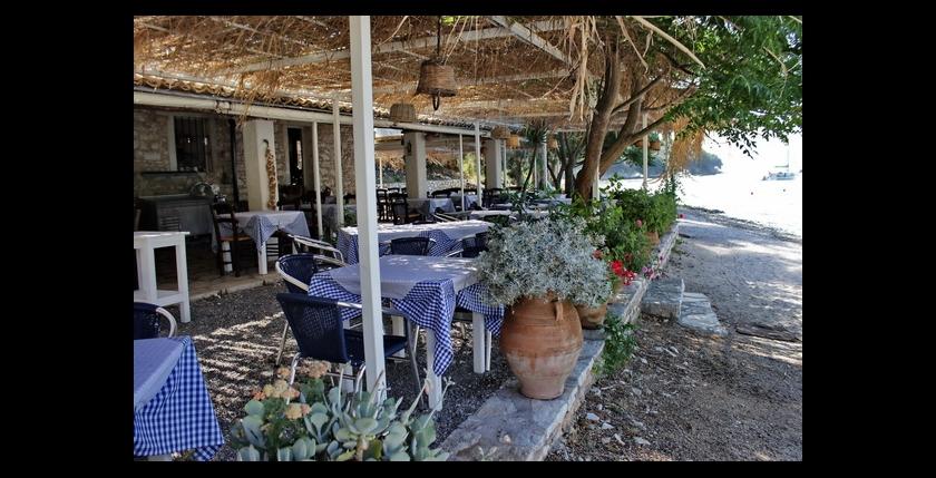 Eucalyptus Taverna 2