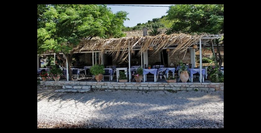Eucalyptus Taverna 13