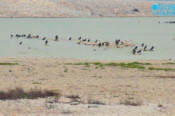Lake Karla Thessaly