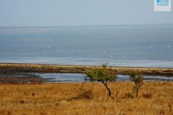 Thrace Ptelea Elos Lagoon