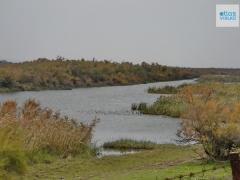 Thrace Evros Delta 6