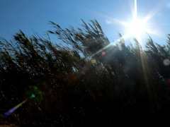 Agrari Mykonos 8
